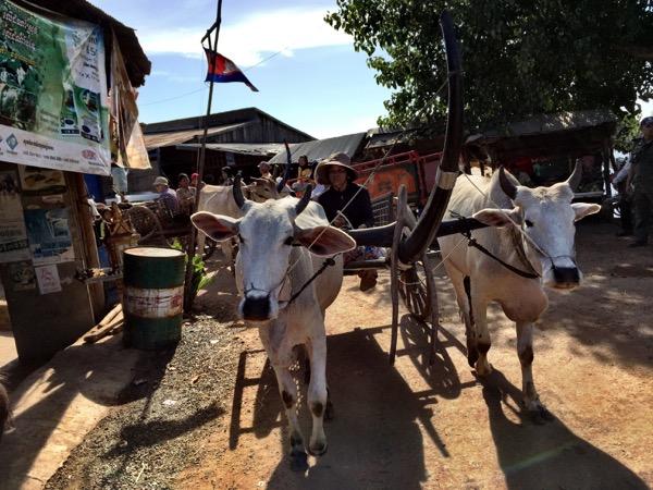 Oxcarts coming through!