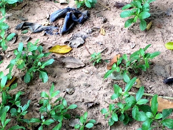 A tooth and some clothing that has come to the surface from the recent heavy rains at one of the mass graves.